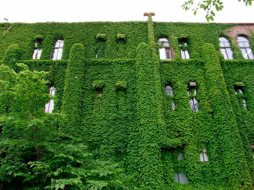 20080619 Green Wall