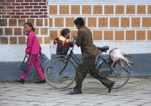 Pig on bike - Kaesong North Korea