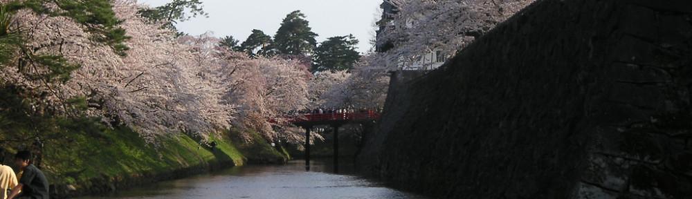 Sakura flowering in old castle