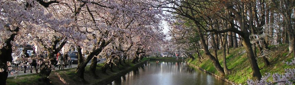 Sakura flowering tunnel