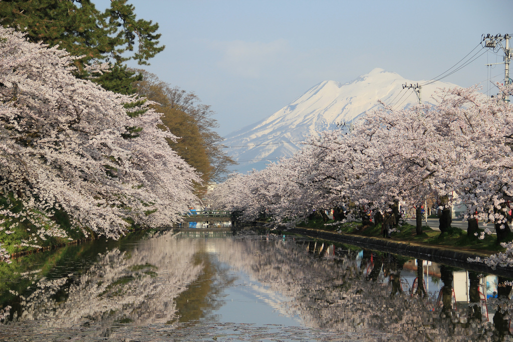 Hirosaki Sakura Festival 20110503