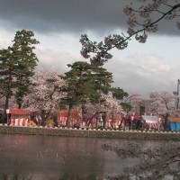 Sakura Festival, Takada Park, Joetsu, Niigata / 高田城百万人観桜会