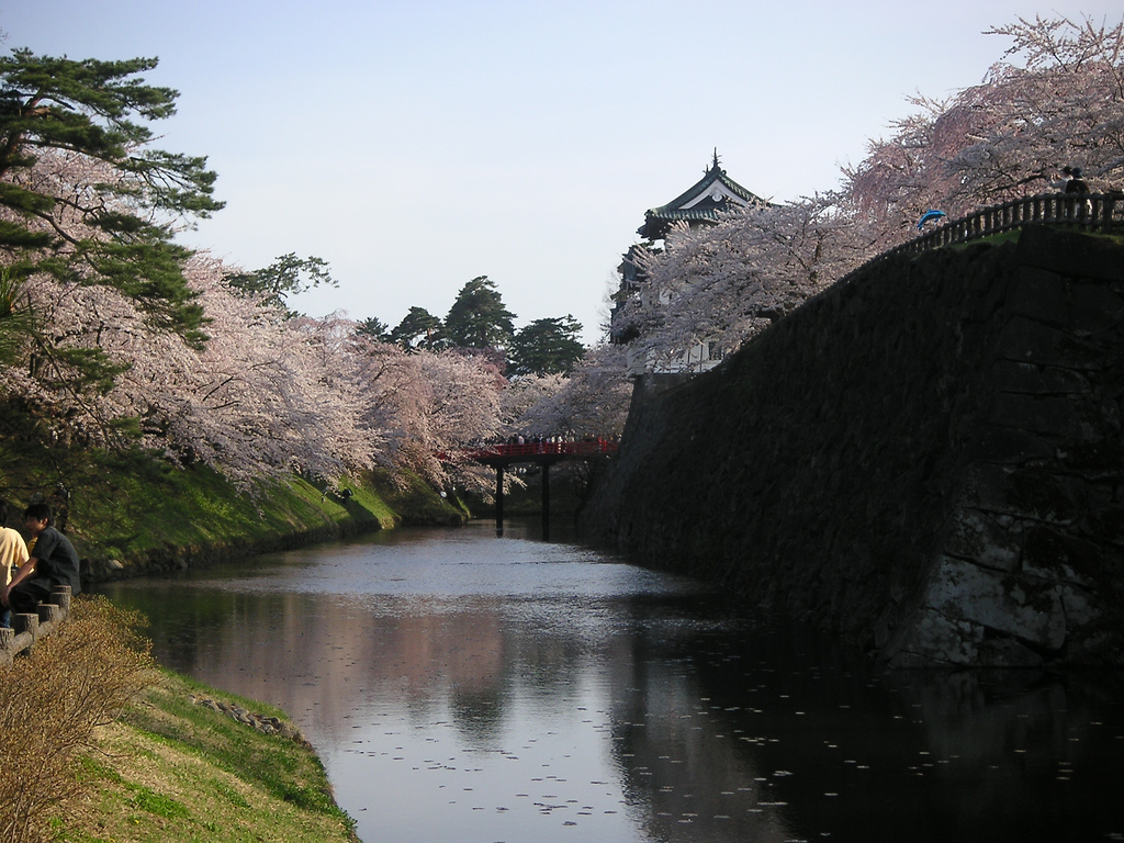 Sakura flowering in old castle